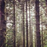 Árvores silenciosas Imagem de Stock