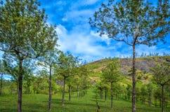 Árvores simétricas em um vale Imagem de Stock