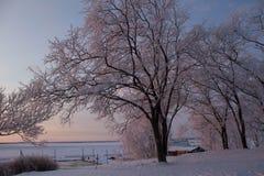Árvores Snow-covered Fotografia de Stock Royalty Free