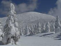 Árvores Snow-covered na inclinação de montanha fotografia de stock