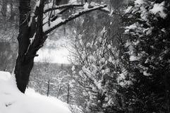 Árvores snowcapped da estação do inverno em france do sul na costa atlântica Fotos de Stock Royalty Free
