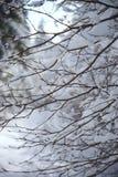Árvores sob a neve imagens de stock