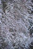 Árvores sob a neve fotografia de stock royalty free