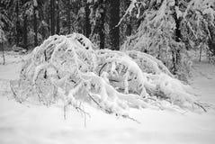 Árvores sob a neve foto de stock royalty free
