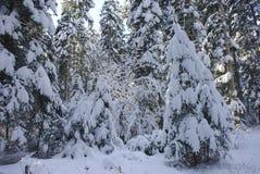 Árvores sob a neve fotos de stock royalty free