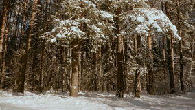 Árvores sob a neve video estoque