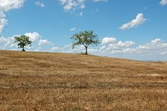 Árvores sobre montes macios em Toscânia foto de stock
