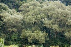 Árvores sobre o rio Fotografia de Stock Royalty Free