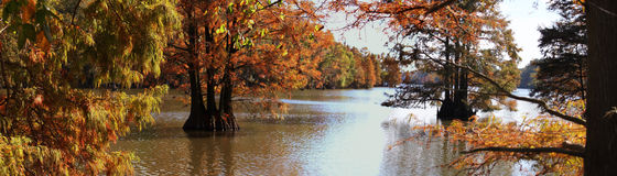 Árvores Stumpy do lago e da queda Imagens de Stock