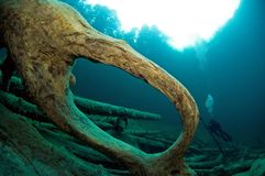 Árvores subaquáticas no lago. imagem de stock