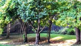 Árvores Sunlit fotos de stock royalty free
