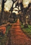 Árvores surpreendentes de passeio do parque da floresta imagem de stock