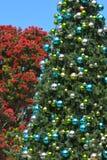Árvores tradicionais e nativas de Nova Zelândia de Natal foto de stock royalty free