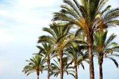 Árvores tropicais Foto de Stock