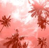 Árvores tropicais da palma da vista inferior ao céu puro imagem de stock royalty free