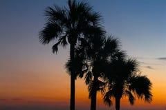 Árvores tropicais do alvorecer fotografia de stock royalty free