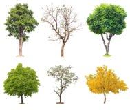 Árvores tropicais isoladas Fotos de Stock
