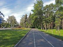 Árvores urbanas do passeio e da estrada da rua da paisagem Imagem de Stock Royalty Free
