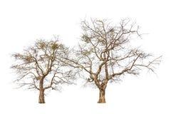 Árvores velhas e inoperantes Fotografia de Stock Royalty Free