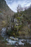 Árvores velhas em um penhasco pelo rio Imagens de Stock