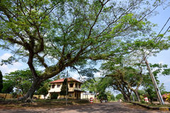 Árvores velhas grandes Foto de Stock Royalty Free