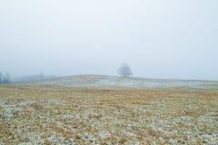 Árvores velhas no prado smog inverno, Letónia 2011 foto de stock royalty free