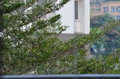 Árvores verdes foto de stock royalty free
