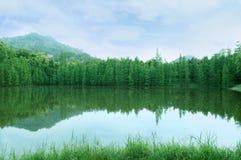 Árvores verdes Imagens de Stock Royalty Free