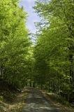 Árvores verdes Fotos de Stock