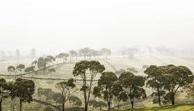 Árvores verdes Fotos de Stock Royalty Free