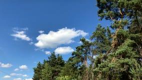 Árvores verdes bonitas na floresta contra o céu azul filme
