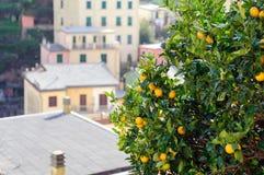 Árvores verdes com limões amarelos foto de stock