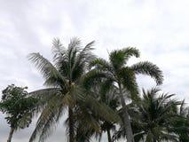 Árvores verdes do arbusto com céu claro Imagem de Stock Royalty Free