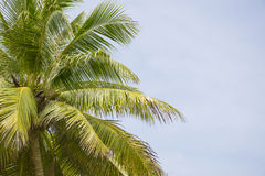 Árvores verdes do arbusto com céu claro Fotos de Stock Royalty Free