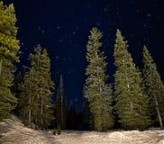 Árvores verdes do Lit na noite com estrelas imagem de stock