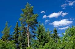 Árvores verdes e céu azul Foto de Stock Royalty Free