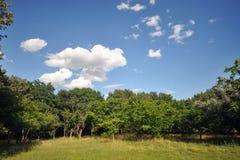 Árvores verdes e céu azul com nuvens fotografia de stock