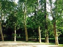 Árvores verdes em um parque Foto de Stock Royalty Free