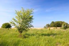 Árvores verdes em um prado Imagens de Stock Royalty Free