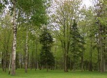 Árvores verdes em uma floresta foto de stock royalty free