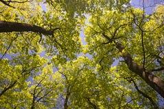 Árvores verdes em uma floresta imagens de stock