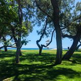 Árvores verdes em uma praia imagens de stock royalty free