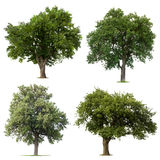 Árvores verdes frondosas Imagens de Stock Royalty Free