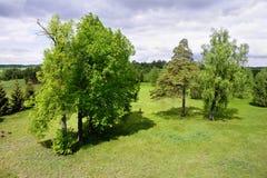 Árvores verdes luxúrias fotografia de stock