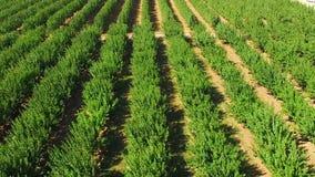 Árvores verdes na exploração agrícola Movimento lento video estoque