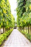 Árvores verdes na fileira Fotografia de Stock