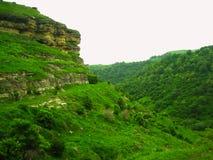 Árvores verdes na montanha no vale fotos de stock royalty free