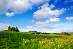 Árvores verdes no campo e nas nuvens de flores Fotografia de Stock