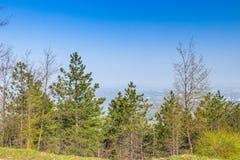 Árvores verdes no campo italiano Imagem de Stock