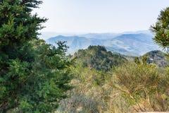 Árvores verdes no campo italiano Foto de Stock